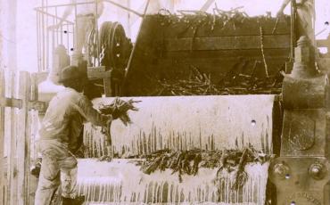 La caña de azúcar siendo triturada por una máquina