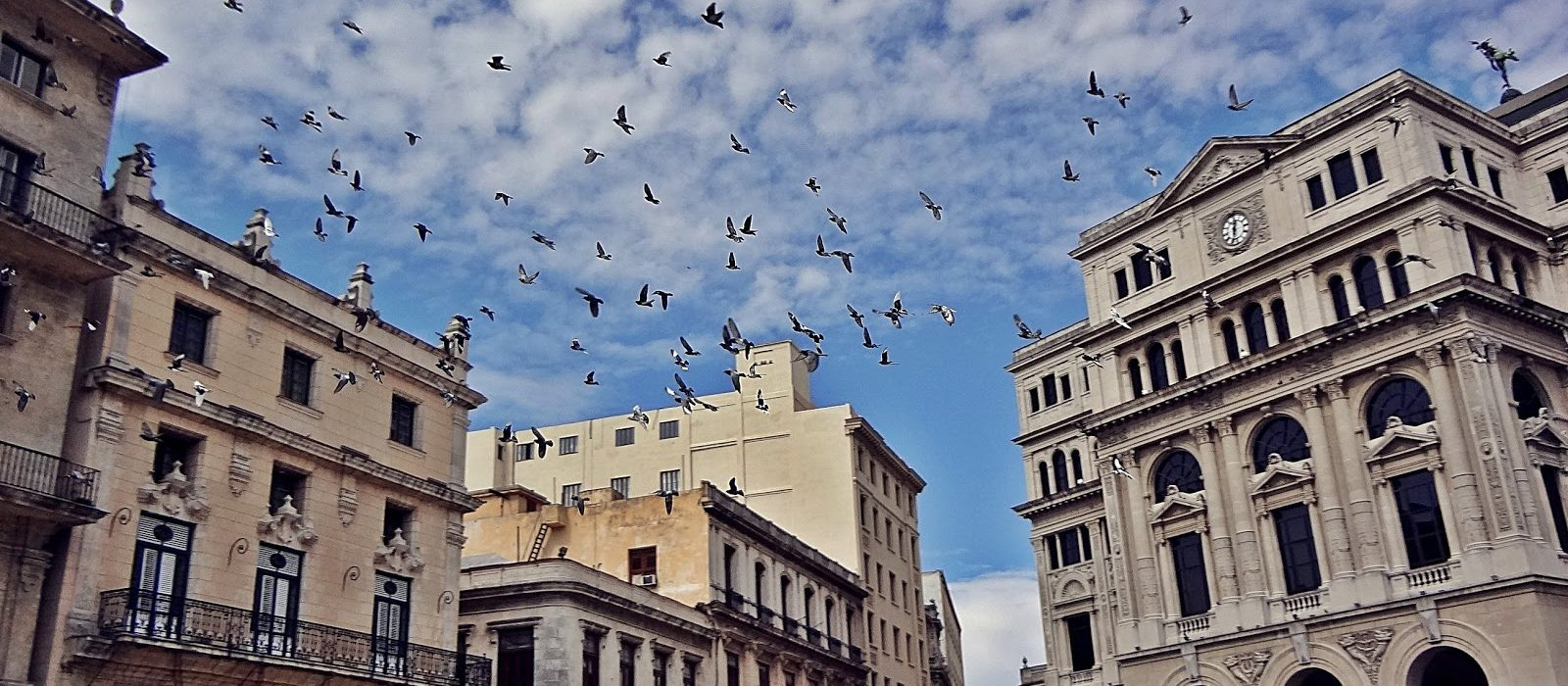 Taller Recuperación, manejo y conservación de las aves en el Centro Histórico
